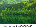 Green Forest By The Lake In...