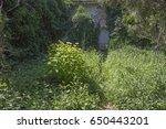 overgrown  abandoned garden  in ... | Shutterstock . vector #650443201