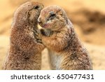 Stock photo a couple of prairie dogs hugging 650477431