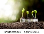 seedlings are growing from coin ... | Shutterstock . vector #650489011