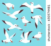 Cartoon Atlantic Seabird ...