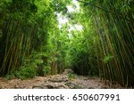 path through dense bamboo... | Shutterstock . vector #650607991