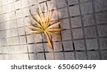 yellow leaves on footpath | Shutterstock . vector #650609449
