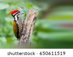Small photo of Abyssinian Woodpecker