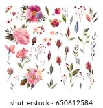 watercolor floral collection... | Shutterstock . vector #650612584