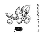 soybean hand drawn vector... | Shutterstock .eps vector #650630569