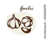 vector hand drawn garlic. herbs ... | Shutterstock .eps vector #650660095