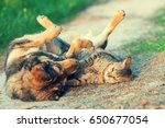 Stock photo dog and cat best friends playing together outdoor lying on the back together 650677054