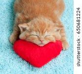 Little Kitten Sleeping On The...