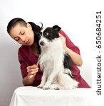 dog groomer is combing dogs wool | Shutterstock . vector #650684251