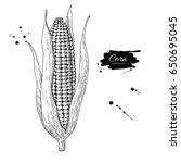 Corn Cob Hand Drawn...