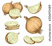 vintage onion. hand drawn... | Shutterstock .eps vector #650695489