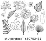 hand drawn tropical leaves... | Shutterstock .eps vector #650703481