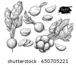 radish hand drawn vector... | Shutterstock .eps vector #650705221