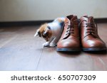 small tricolor kitten playing... | Shutterstock . vector #650707309
