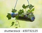 A Vertical Garden Made With A...
