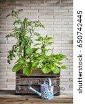 a small urban vegetable garden... | Shutterstock . vector #650742445