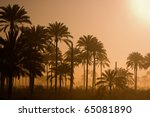 A Landscape Of Silhouetted Palm ...