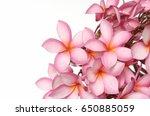 frangipani flowers | Shutterstock . vector #650885059