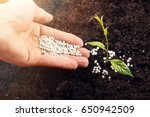 hand of a farmer giving...   Shutterstock . vector #650942509