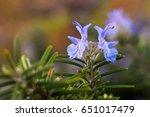 Beautiful Macro Violet Flowers...