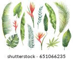 watercolor set tropical leaves... | Shutterstock . vector #651066235