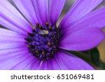 Tiny Fly Sitting On A Purple...