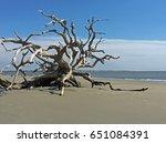 Fallen Tree  Driftwood Beach ...