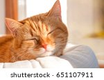 Stock photo red cat basking in the sun 651107911
