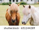 Small photo of Horse profile. Horse portrait