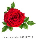 rose isolated on the white... | Shutterstock . vector #651172519