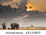 african sunset with elephants | Shutterstock . vector #65119855