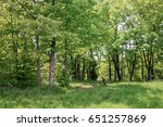 deciduous forest. forest trail... | Shutterstock . vector #651257869