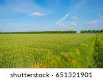 green wheat field in spring in... | Shutterstock . vector #651321901
