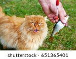 Fisherman Feeds Fish To The Cat