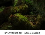 Fern And Moss On Moss Tree.mos...