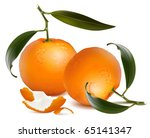 mandarins with leaves. vector...