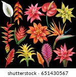 Stock vector set of tropical flowers 651430567