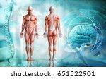 human body  3d illustration | Shutterstock . vector #651522901