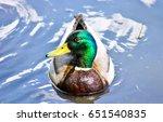 duck on water | Shutterstock . vector #651540835