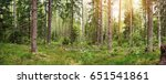 Pine And Fir Forest Panorama I...
