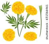 Marigold Flower   Tagetes....