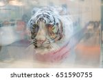 Small photo of 3d white tiger printed on sheets of glass - symbol of the exhibition Aqua-Therm, Kiev, Ukraine, 30.05.2017 - 02.06.2017.