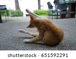 Cat Yoga Exercise  Close Up At...