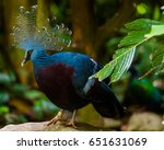 a common crowned pigeon sits... | Shutterstock . vector #651631069