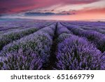 sunset over a summer lavender... | Shutterstock . vector #651669799