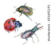 watercolor painting. bugs on... | Shutterstock . vector #651692191