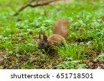 Dark Brown Squirrel  Black ...