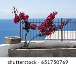 Small photo of Aeolian colours by Rinella. Bougainvillea is a genus of thorny ornamental vines, bushes, and trees with flower-like spring leaves near its flowers. Salina, Aeolian Islands, Sicily, Italy