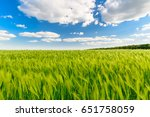 Green Field Full Of Wheat And...